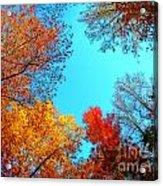 Nature's Pallete 1 Acrylic Print