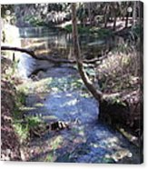 Natures Path Two Acrylic Print