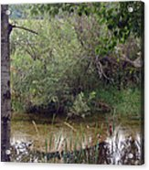 Nature's Pond Acrylic Print