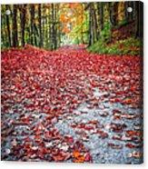 Nature's Red Carpet Acrylic Print