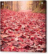 Nature's Red Carpet Revisited Acrylic Print