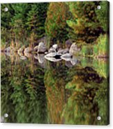 Natures Reflection Acrylic Print by Mark Papke