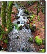Nature's Rush Acrylic Print