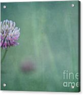 Natures Scent Acrylic Print