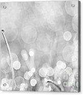 Natures Sparkle Dewdrops In Sunlit Grass Black And White Acrylic Print
