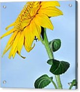 Nature's Sunshine Acrylic Print