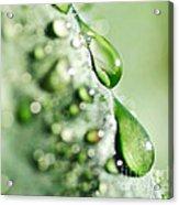 Nature's Teardrops Acrylic Print