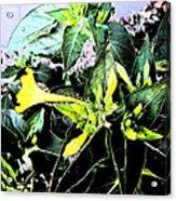 Nature's Trumpet Acrylic Print