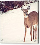 Natures Winter Visit Acrylic Print