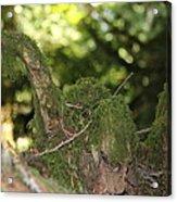 Natures Wooden Duck Acrylic Print