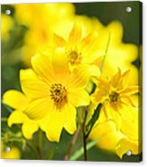 Natures Yellow Acrylic Print by Lori Tambakis