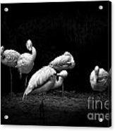 Naturescape 57 D Acrylic Print