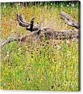 Naturescape Acrylic Print
