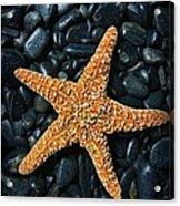 Nautical - Starfish On Black Rocks Acrylic Print