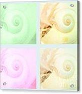 Nautilus Shells Acrylic Print