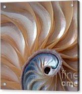 Nautilus Wave Acrylic Print