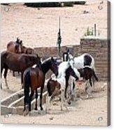 Navajo Herd Acrylic Print