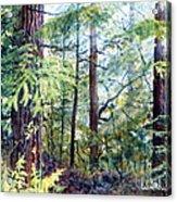 Navarro River Redwoods Acrylic Print