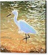 Navigating The Tide Acrylic Print