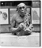 Neanderthal Museum Display, 1924 Acrylic Print