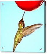 Nectar Good To The Last Drop Acrylic Print