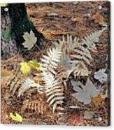 Needles And Leaves Acrylic Print