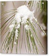 Needles In The Snow Acrylic Print