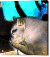 Negative Cat Acrylic Print