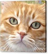 Yellow Cat Digital Art Acrylic Print