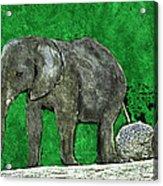 Nelly The Elephant Acrylic Print