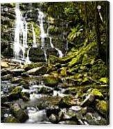 Nelson Falls Tasmania Acrylic Print