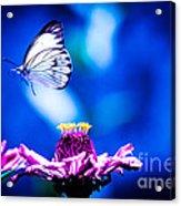 Neon Butterfly Acrylic Print