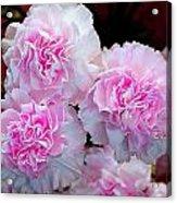 Neon Carnations Acrylic Print