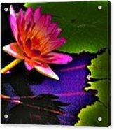 Neon Lily Acrylic Print