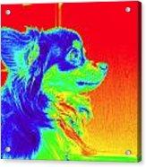 Neon Papillion Acrylic Print