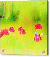 Neon Poppies Acrylic Print