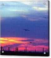 Neon Sunset Acrylic Print