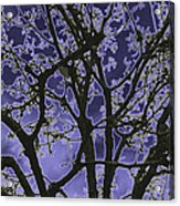 Neon Winter Tree Acrylic Print