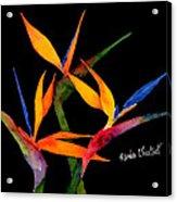 Neons Of Paradise Acrylic Print