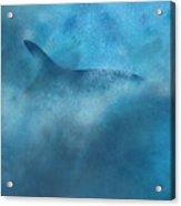 Nereid Or Fin Whale Off Of Newport Beach Acrylic Print
