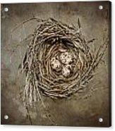 Nest Eggs Acrylic Print