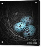 Nest Of 3  Acrylic Print