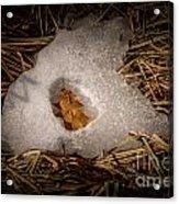 Nesting Leaf Acrylic Print