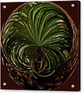 Nesting Pine Orb Acrylic Print