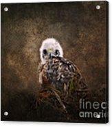 Nestling Acrylic Print by Jai Johnson