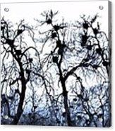 Chaos Is Nesting Acrylic Print by John Grace