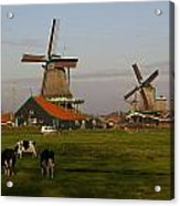 Netherlands Acrylic Print