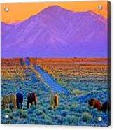 Wild Horse Country  Acrylic Print