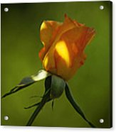 Never Lose Your Love Acrylic Print