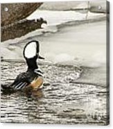Never Too Cold To Mate Acrylic Print by Ilene Hoffman